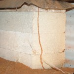 Termite tunnel subfloor