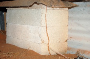 Termite tunnel subfloor discovered by Outback Pest Control
